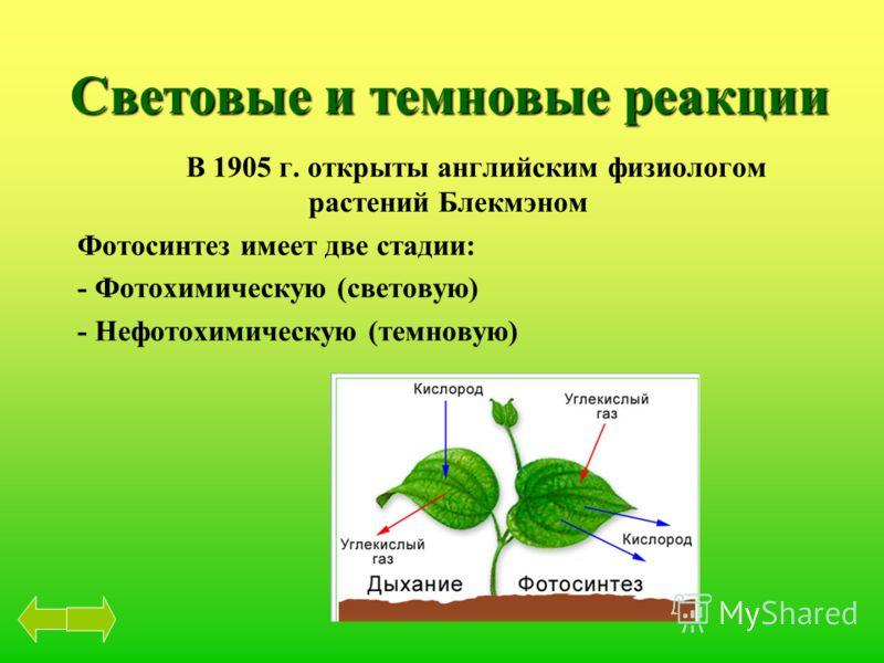 Световые и темновые реакции В 1905 г. открыты английским физиологом растений Блекмэном Фотосинтез имеет две стадии: - Фотохимическую (световую) - Нефотохимическую (темновую)