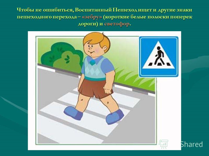 Чтобы не ошибиться, Воспитанный Пешеход ищет и другие знаки пешеходного перехода – «зебру» (короткие белые полоски поперек дороги) и светофор.