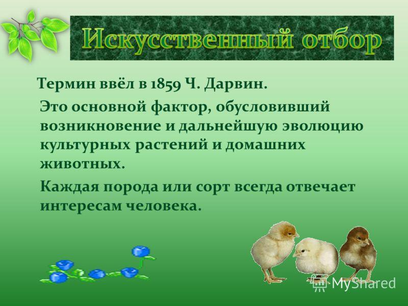 Термин ввёл в 1859 Ч. Дарвин. Это основной фактор, обусловивший возникновение и дальнейшую эволюцию культурных растений и домашних животных. Каждая порода или сорт всегда отвечает интересам человека.