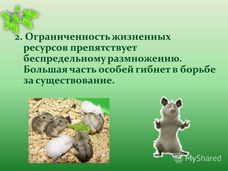 2. Ограниченность жизненных ресурсов препятствует беспредельному размножению. Большая часть особей гибнет в борьбе за существование.
