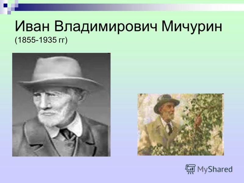 Иван Владимирович Мичурин (1855-1935 гг)