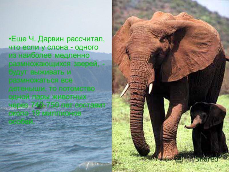 Еще Ч. Дарвин рассчитал, что если у слона - одного из наиболее медленно размножающихся зверей, - будут выживать и размножаться все детеныши, то потомство одной пары животных через 740-750 лет составит около 19 миллионов особей.