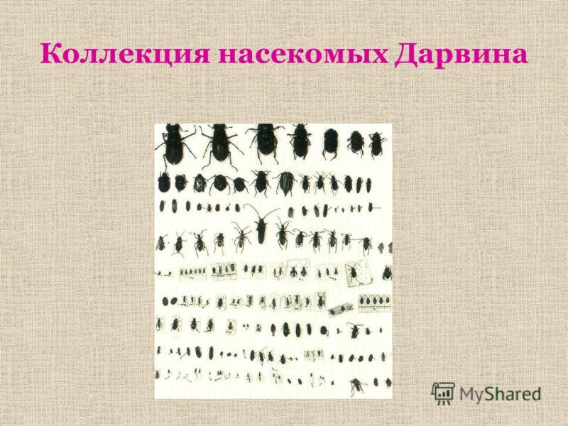 Коллекция насекомых Дарвина