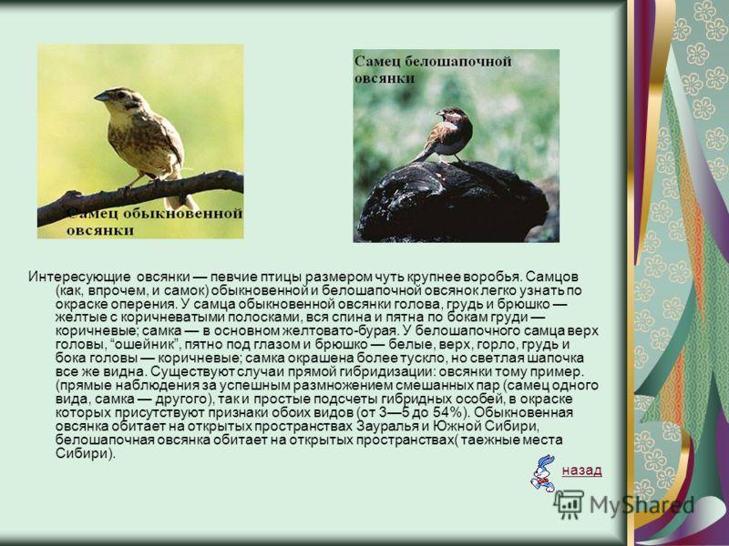Интересующие овсянки певчие птицы размером чуть крупнее воробья. Самцов (как, впрочем, и самок) обыкновенной и белошапочной овсянок легко узнать по окраске оперения. У самца обыкновенной овсянки голова, грудь и брюшко желтые с коричневатыми полосками