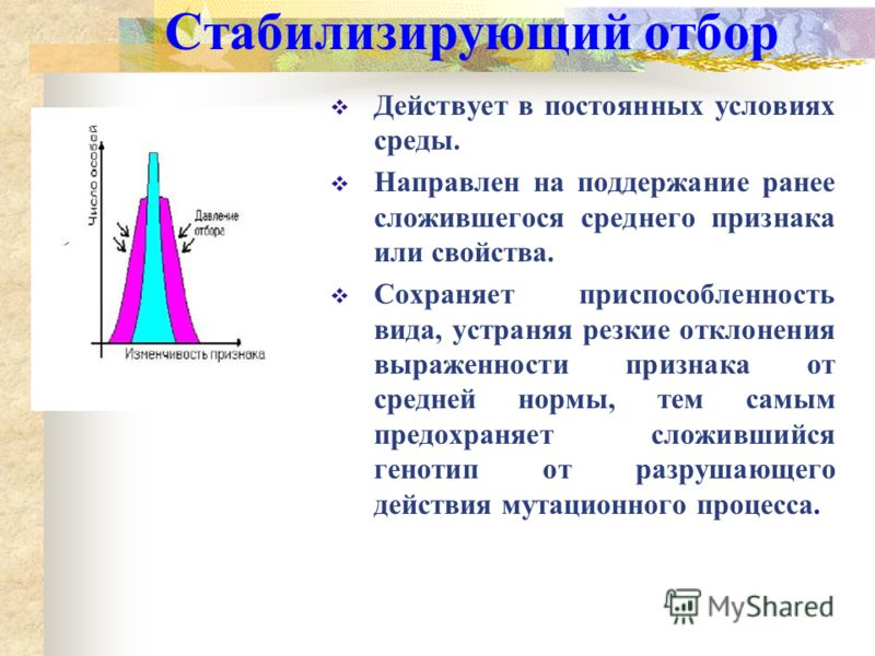 Формы естественного отбора СтабилизирующийДвижущий Дизруптивный (разрывающий)