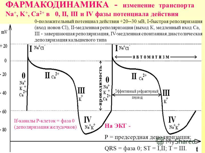 ФАРМАКОДИНАМИКА - изменение транспорта Na +, K +, Ca 2+ в 0, II, III и IV фазы потенциала действия 0-положительный потенциал действия +20--30 мВ, I-быстрая реполяризация (вход ионов Cl), II-медленная реполяризация (выход К, медленный вход Ca, III - з