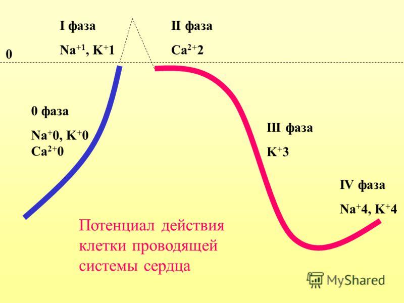 0 фаза Na + 0, K + 0 Ca 2+ 0 II фаза Ca 2+ 2 III фаза K + 3 IV фаза Na + 4, K + 4 I фаза Na +1, K + 1 0 Потенциал действия клетки проводящей системы сердца