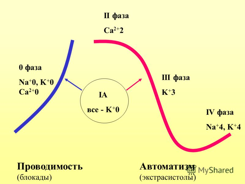 ПроводимостьАвтоматизм (блокады)(экстрасистолы) 0 фаза Na + 0, K + 0 Ca 2+ 0 II фаза Ca 2+ 2 III фаза K + 3 IV фаза Na + 4, K + 4 IA все - K + 0