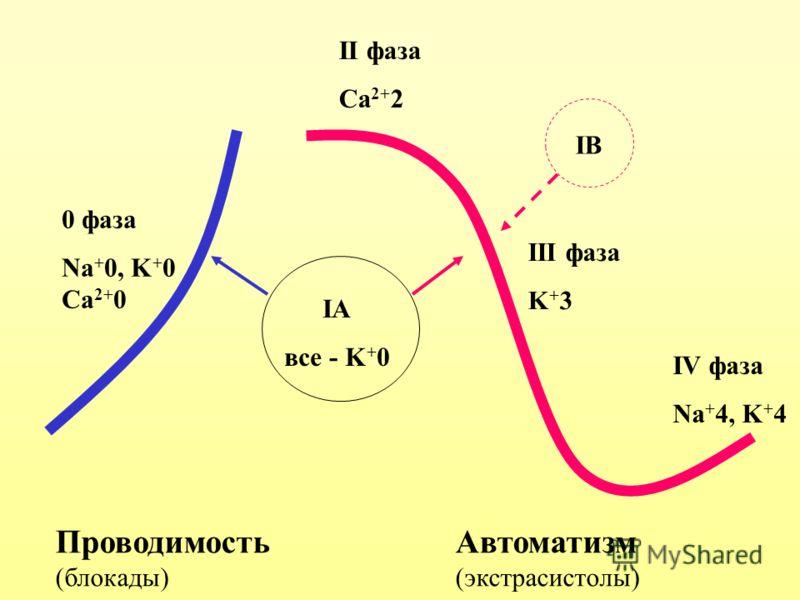 ПроводимостьАвтоматизм (блокады)(экстрасистолы) 0 фаза Na + 0, K + 0 Ca 2+ 0 II фаза Ca 2+ 2 III фаза K + 3 IV фаза Na + 4, K + 4 IA все - K + 0 IВIВ