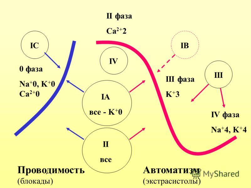 ПроводимостьАвтоматизм (блокады)(экстрасистолы) 0 фаза Na + 0, K + 0 Ca 2+ 0 II фаза Ca 2+ 2 III фаза K + 3 IV фаза Na + 4, K + 4 IA все - K + 0 IВIВIСIС III II все IV