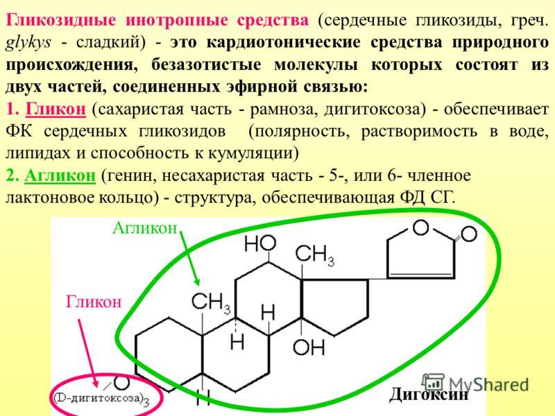Гликозидные инотропные средства (сердечные гликозиды, греч. glykys - сладкий) - это кардиотонические средства природного происхождения, безазотистые молекулы которых состоят из двух частей, соединенных эфирной связью: 1. Гликон (сахаристая часть - ра