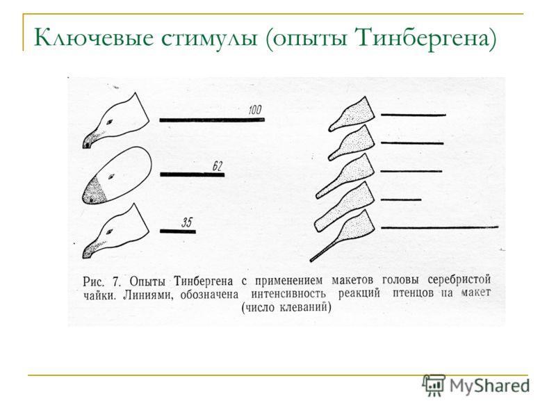 Ключевые стимулы (опыты Тинбергена)