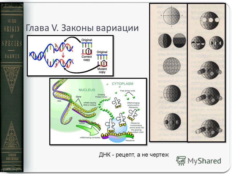 Глава V. Законы вариации ДНК - рецепт, а не чертеж