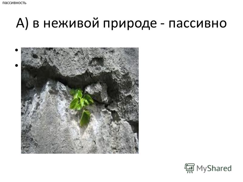 А) в неживой природе - пассивно пассивность пассивность