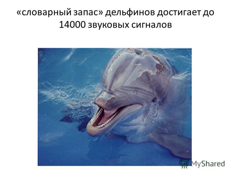 «словарный запас» дельфинов достигает до 14000 звуковых сигналов