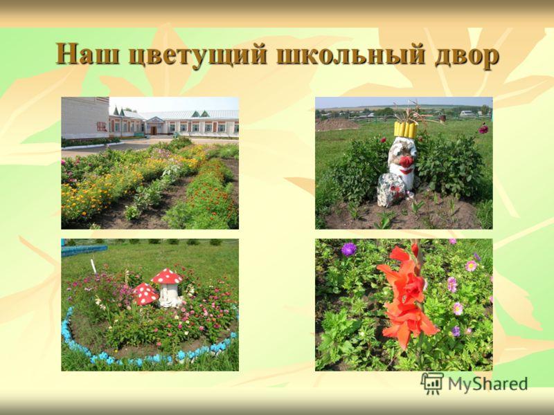 Наш цветущий школьный двор