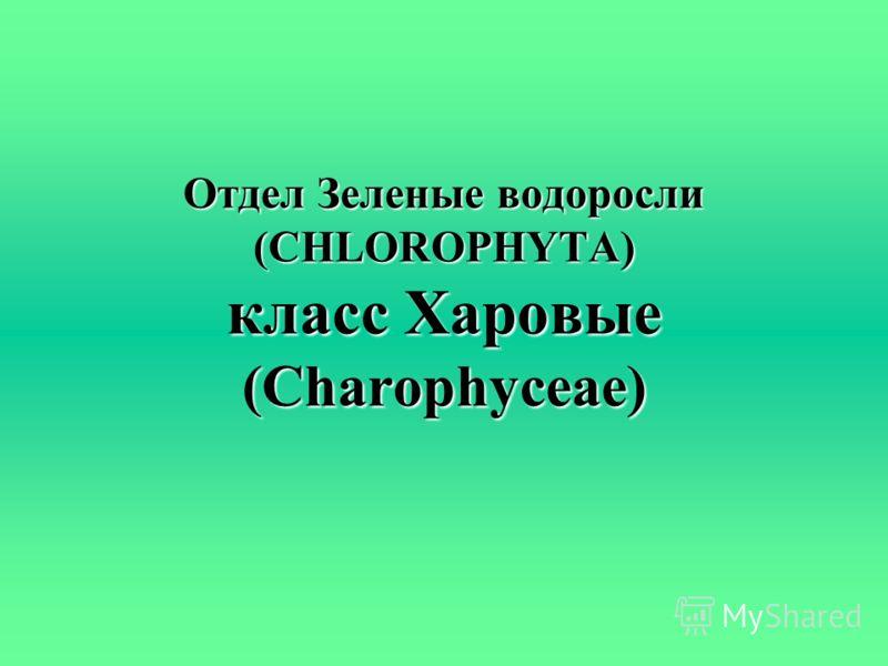 Отдел Зеленые водоросли (CHLOROPHYTA) класс Харовые (Charophyceae)