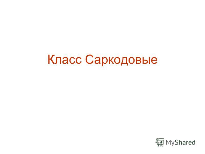 Класс Саркодовые