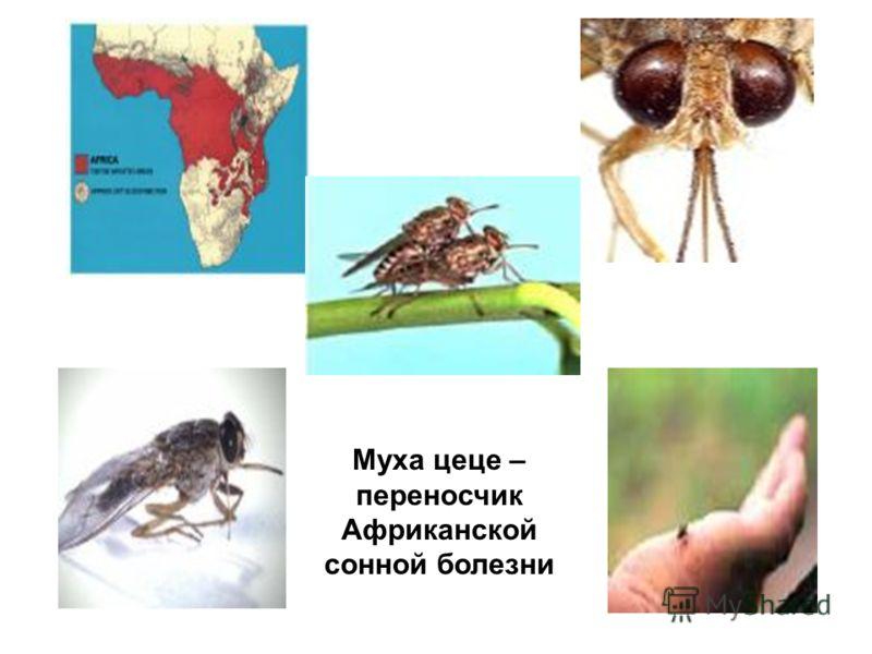 Насекомые картинки жалящие насекомые