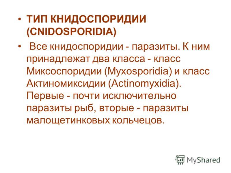 ТИП КНИДОСПОРИДИИ (CNIDOSPORIDIA) Все книдоспоридии - паразиты. К ним принадлежат два класса - класс Миксоспоридии (Myxosporidia) и класс Актиномиксидии (Actinomyxidia). Первые - почти исключительно паразиты рыб, вторые - паразиты малощетинковых коль