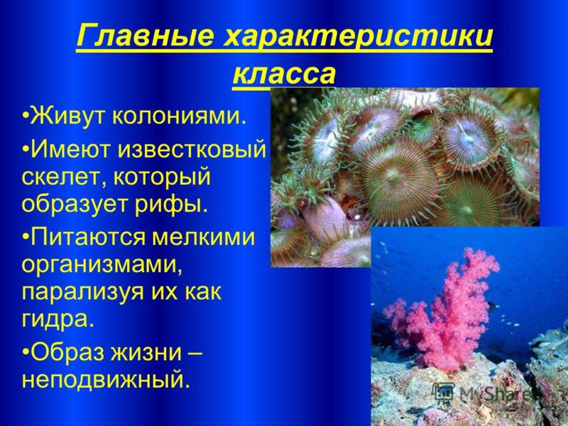 Главные характеристики класса Живут колониями. Имеют известковый скелет, который образует рифы. Питаются мелкими организмами, парализуя их как гидра. Образ жизни – неподвижный.