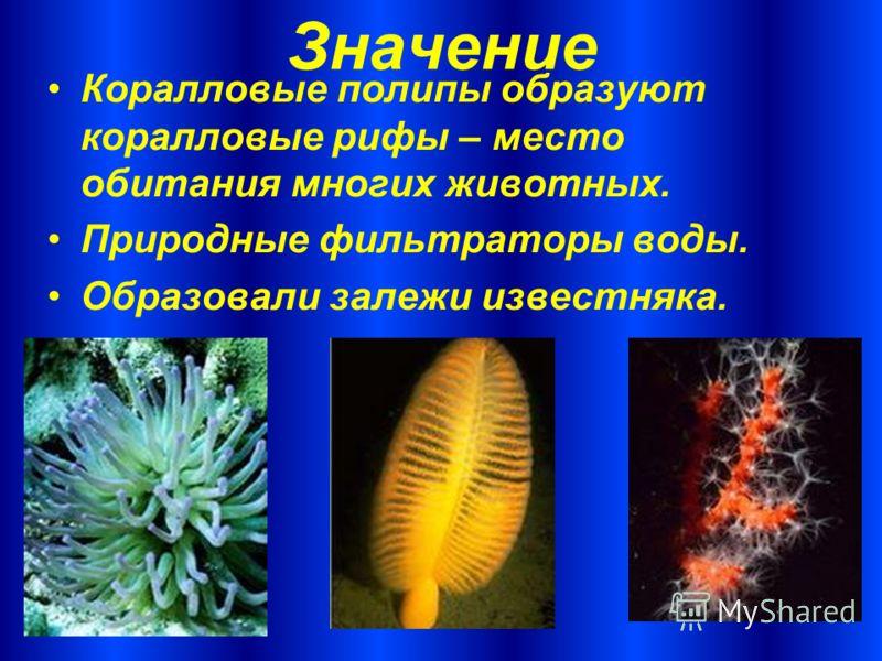 Значение Коралловые полипы образуют коралловые рифы – место обитания многих животных. Природные фильтраторы воды. Образовали залежи известняка.