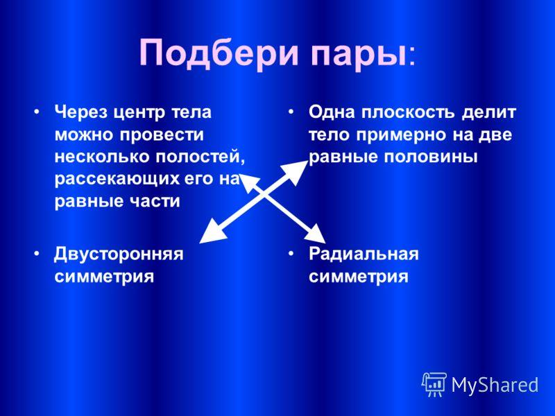 Подбери пары : Через центр тела можно провести несколько полостей, рассекающих его на равные части Одна плоскость делит тело примерно на две равные половины Двусторонняя симметрия Радиальная симметрия