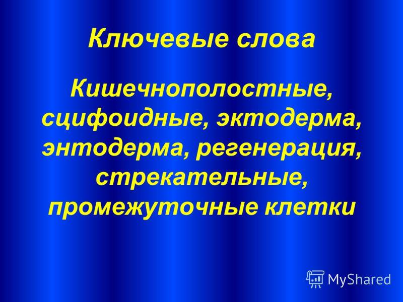 Ключевые слова Кишечнополостные, сцифоидные, эктодерма, энтодерма, регенерация, стрекательные, промежуточные клетки