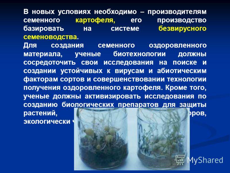 В новых условиях необходимо – производителям семенного картофеля, его производство базировать на системе безвирусного семеноводства. Для создания семенного оздоровленного материала, ученые биотехнологии должны сосредоточить свои исследования на поиск