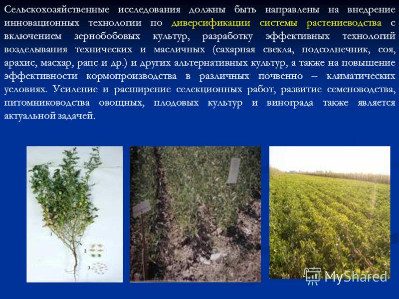 Сельскохозяйственные исследования должны быть направлены на внедрение инновационных технологии по диверсификации системы растениеводства с включением зернобобовых культур, разработку эффективных технологий возделывания технических и масличных (сахарн