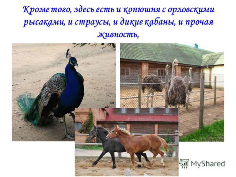 Кроме того, здесь есть и конюшня с орловскими рысаками, и страусы, и дикие кабаны, и прочая живность,