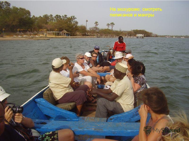 На экскурсию: смотреть пеликанов и мангры