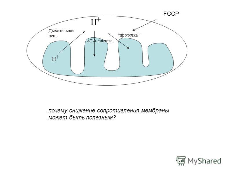 Дыхательная цепь АТФ-синтаза протечка H + H + FCCP почему снижение сопротивления мембраны может быть полезным?
