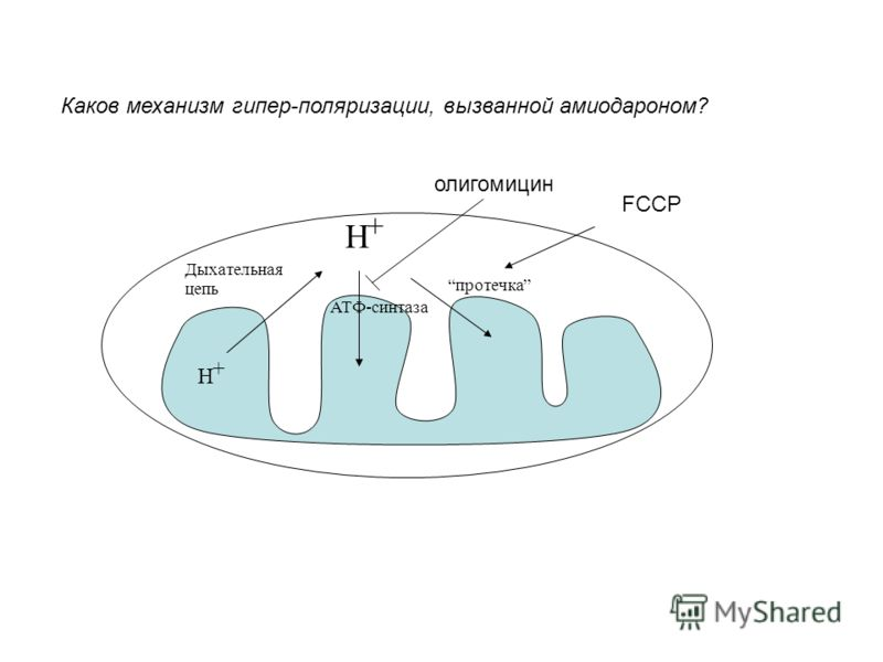 Дыхательная цепь АТФ-синтаза протечка H + H + FCCP олигомицин Каков механизм гипер-поляризации, вызванной амиодароном?