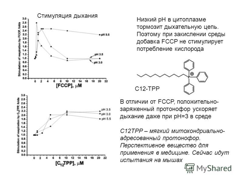 Низкий pH в цитоплазме тормозит дыхательную цепь. Поэтому при закислении среды добавка FCCP не стимулирует потребление кислорода В отличии от FCCP, положительно- заряженный протонофор ускоряет дыхание даже при pH=3 в среде С12TPP – мягкий митохондриа