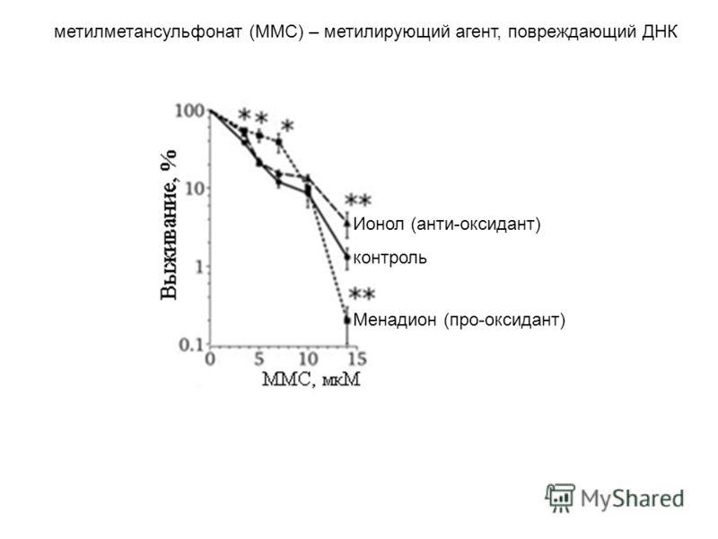 метилметансульфонат (ММС) – метилирующий агент, повреждающий ДНК Ионол (анти-оксидант) Менадион (про-оксидант) контроль