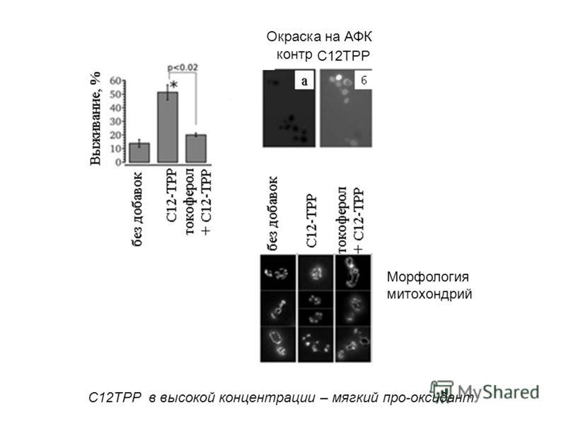 контр Окраска на АФК С12ТРР СTAB SDS C12TPP в высокой концентрации – мягкий про-оксидант Морфология митохондрий