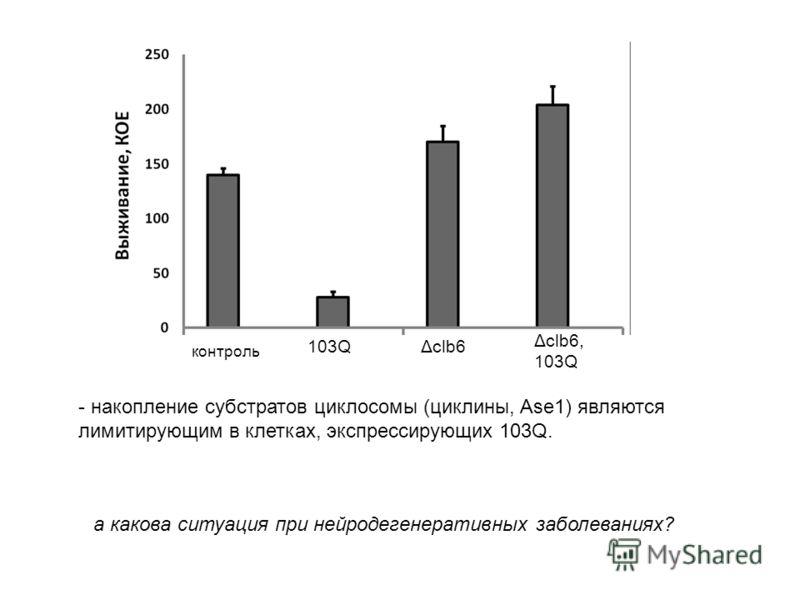 контроль 103QΔclb6 Δclb6, 103Q - накопление субстратов циклосомы (циклины, Ase1) являются лимитирующим в клетках, экспрессирующих 103Q. а какова ситуация при нейродегенеративных заболеваниях?