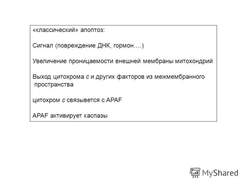 «классический» апоптоз: Сигнал (повреждение ДНК, гормон….) Увеличение проницаемости внешней мембраны митохондрий Выход цитохрома с и других факторов из межмембранного пространства цитохром с связывется с APAF APAF активирует каспазы