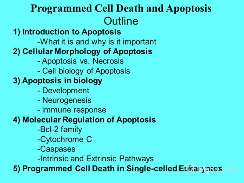 1) Introduction to Apoptosis -What it is and why is it important 2) Cellular Morphology of Apoptosis - Apoptosis vs. Necrosis - Cell biology of Apoptosis 3) Apoptosis in biology - Development - Neurogenesis - immune response 4) Molecular Regulation o