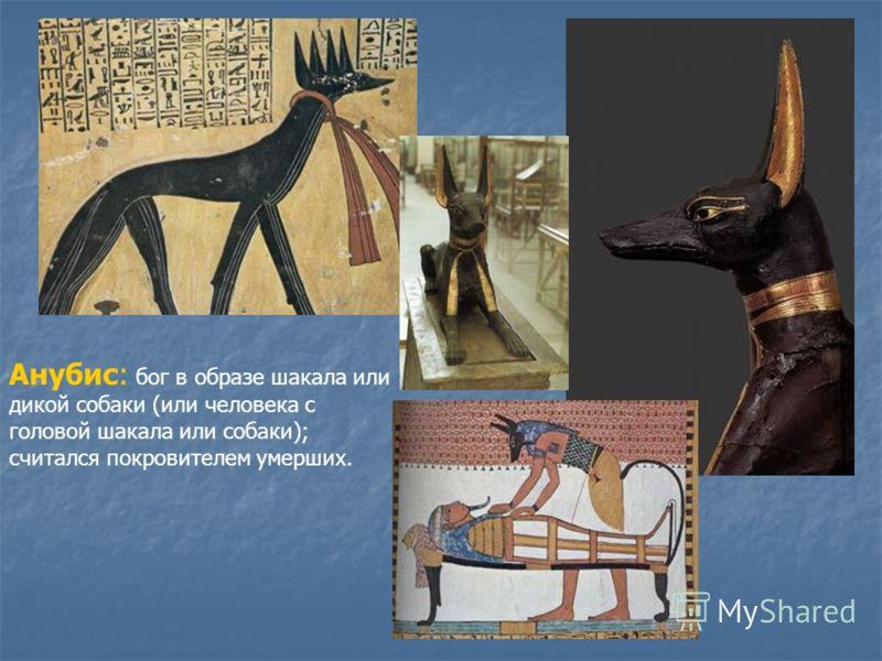 Анубис: бог в образе шакала или дикой собаки (или человека с головой шакала или собаки); считался покровителем умерших.