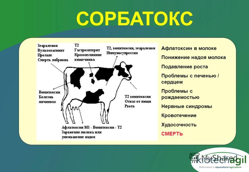 СОРБАТОКС Афлатоксин в молоке Понижение надоя молока Подавление роста Проблемы с печенью / сердцем Проблемы с рождаемостью Нервные синдромы Кровотечение Худосочность СМЕРТЬ