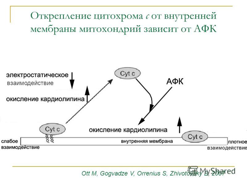 Ott M, Gogvadze V, Orrenius S, Zhivotovsky B, 2007 Открепление цитохрома с от внутренней мембраны митохондрий зависит от АФК взаимодействие