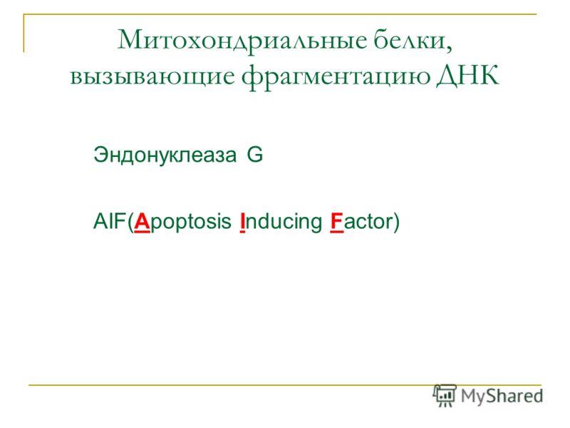 Митохондриальные белки, вызывающие фрагментацию ДНК Эндонуклеаза G AIF(Apoptosis Inducing Factor)