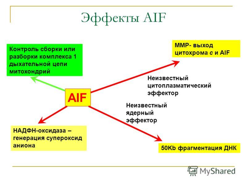Эффекты AIF AIF Контроль сборки или разборки комплекса 1 дыхательной цепи митохондрий НАДФН-оксидаза – генерация супероксид аниона Неизвестный цитоплазматический эффектор MMP- выход цитохрома с и AIF Неизвестный ядерный эффектор 50Kb фрагментация ДНК