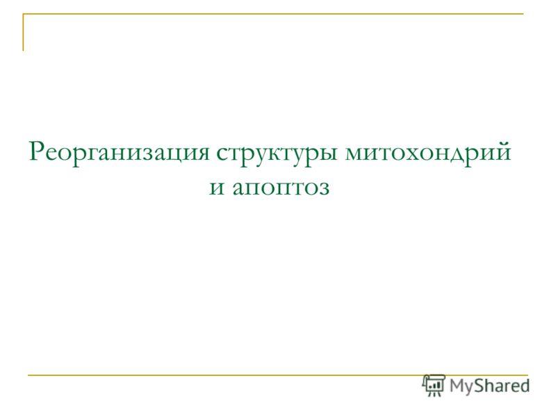 Реорганизация структуры митохондрий и апоптоз
