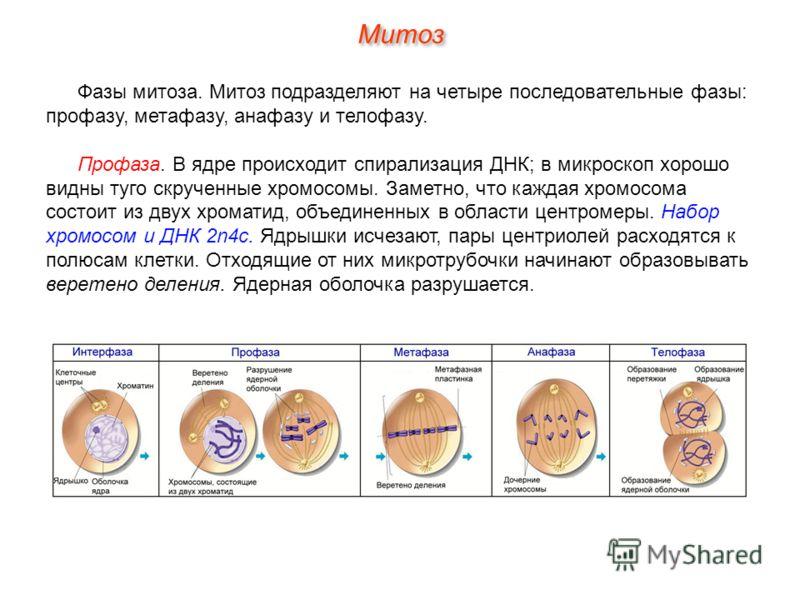 Митрамицин