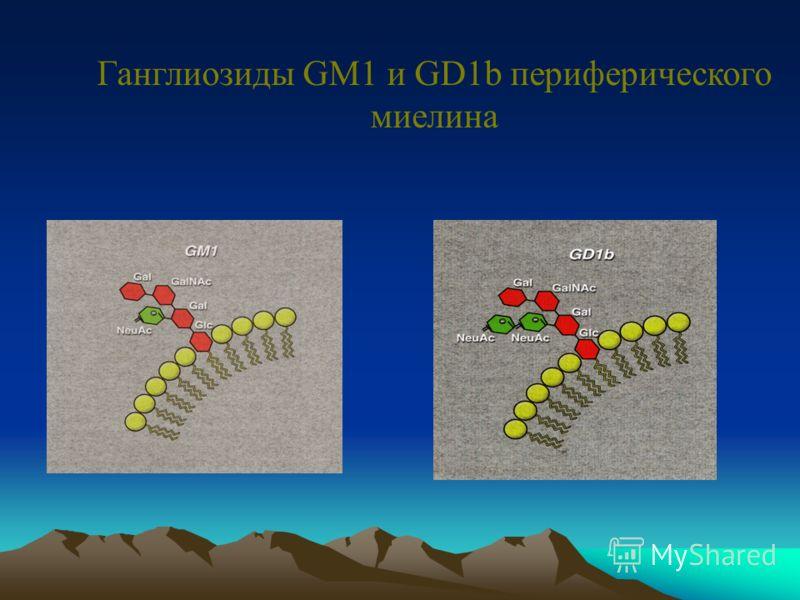 Иммунопатогенез ХВДП IL-2