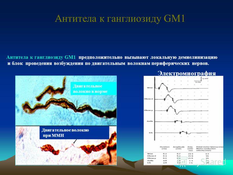 Ганглиозиды GM1 и GD1b периферического миелина