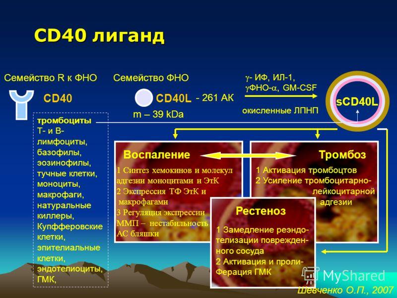 CD40-лиганд – маркер активации тромбоцитов, маркер нестабильности ИБС Шевченко О.П., 2007